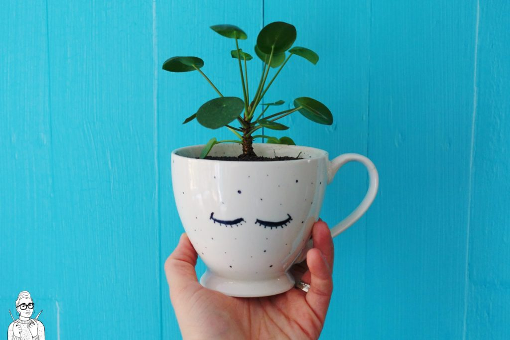 Rośliny dla opornych: Pieniążek